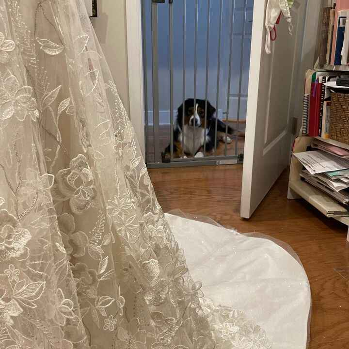 """Was hemming a gown last month while my grand dog was visiting… send me your best """"speech bubble"""" that the dog might have..."""
